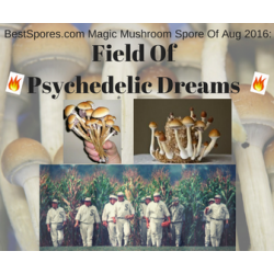 Field Of Psychedelic Dreams - Limited Run Aug 2016